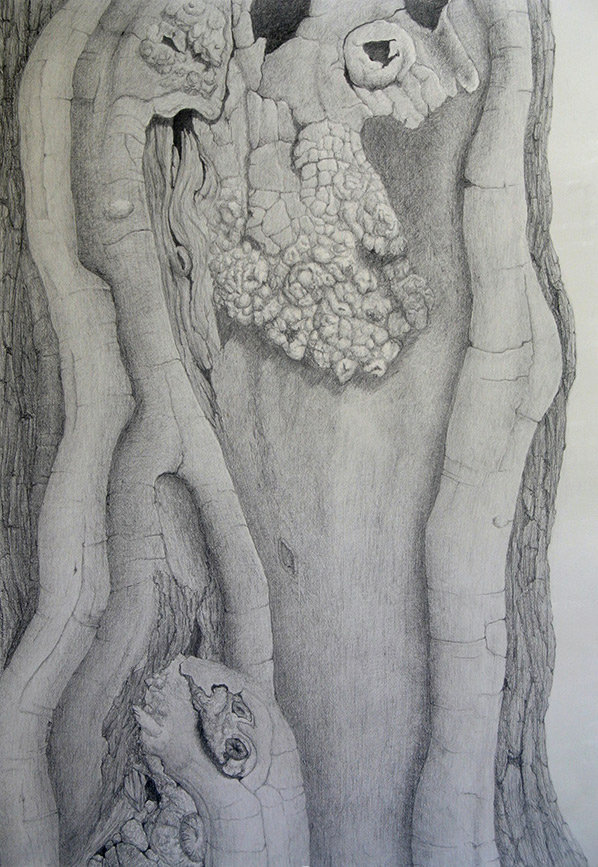 Kathy Strauss drawing, Linthicum Locust 1